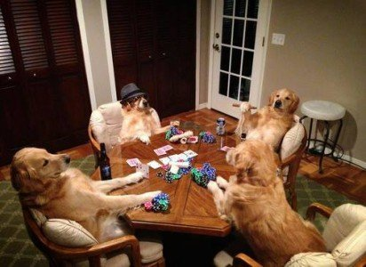 Dog's night out playing poker.